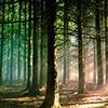 Priroda slike na platnu